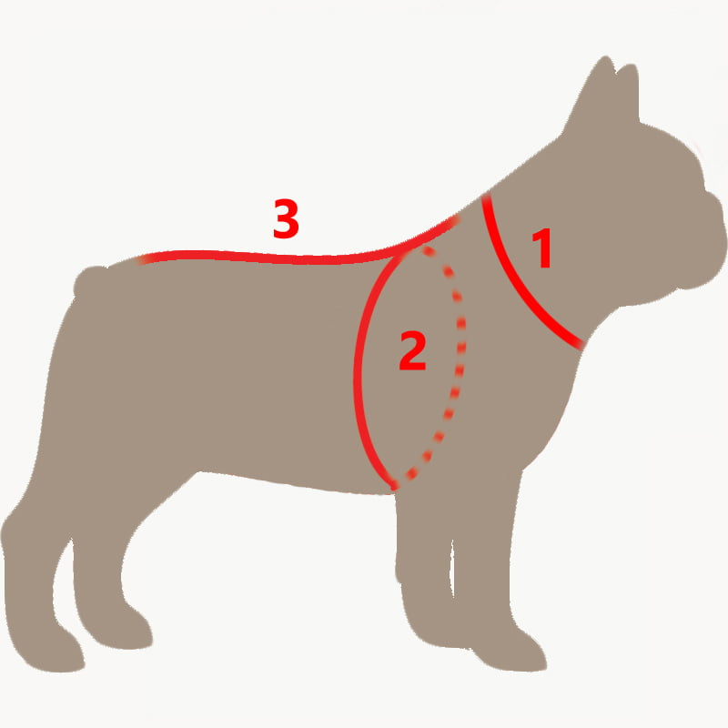 french bulldog outline with hints where to measure a dog